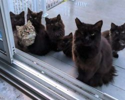 Stray Cat Returns With Her Babies To See The Woman Who Helped Her