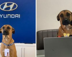 Stray Dog Keeps Coming Back To Hyundai Dealership Until They Give Him A Job And His Own ID Badge