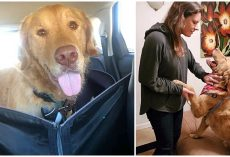 Anxious Golden Got Lost In The Woods, Spent A Year Trying To Find His Family