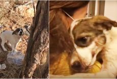 Baby Wept In Pain After Owner Left Her In Woods, Embraced Only Person Who Cared