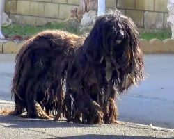 "Abandoned Dog Began To Look Like A ""Wookie"" After 2 Years Alone On The Streets"