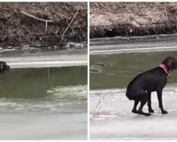 Fire Department Attempts To Beat The Clock Before Stranded Dog Freezes To Death