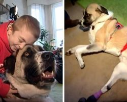 Disabled Boy Adopts Dog Whose Owner Tied Him To A Track And He Got Hit By Train
