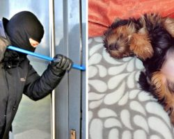 Burglar Exploits Dog's Friendly Nature And Strangles Him In Front Of His Owner
