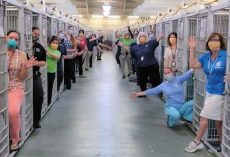 Animal shelter is empty for the first time in history after every dog was adopted