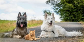 Adorable Kitten Rescued by Two Dogs Now Thinks It's a Dog Too