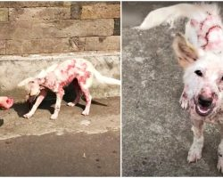 Sickly Street Puppy Neared Woman, Pleaded To Be Rescued Then Was Gone