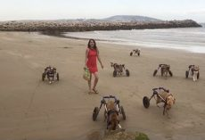 Disabled Dogs Go To The Beach For The First Time