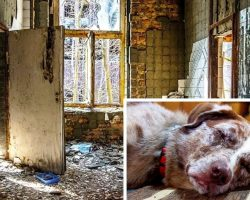 Owners Lock Dog In Tiny Metal Cage And Leave Him In Filthy Apartment For Weeks