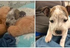 Tiny 5-Week-Old Pup Fights For His Life After Tormentor Throws Him In Dumpster