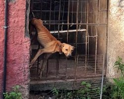Rich Family Left Their Dog Hanging From Back Door & Starved Him For A Month