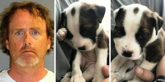 """Man """"Disciplines"""" Puppy By Bashing Puppy's Head Against Wall With Massive Force"""