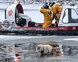 Firemen Rush To Save Freezing Dog Who Fell Through Pond Ice & Got Stuck In Sand