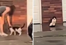 Woman Watches As Neighbors Abandon Their Senior Cat On The Porch And Drive Away