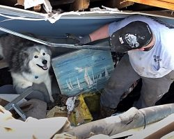 Family's Dog Emerges From Rubble A Day After Deadly Tornado Ravaged Their Home