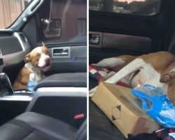 Stray Dog Jumped Into A Truck And Didn't Get Out Until He Was Adopted