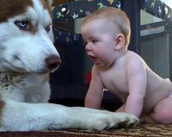 """Dog's Patience Runs Out When Baby Gets Too Close & Dog """"Has A Go"""" At Baby's Face"""