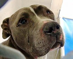 Tears Flow From His Eyes As He Can't Understand Why Family Left Him In Shelter