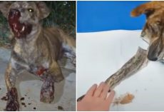 Wounded Stray Overlooked Till Sundown Thanks The Only Person Who Cared To Stop