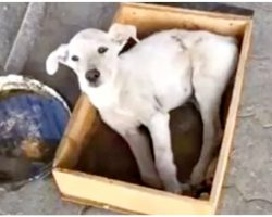 Countless Folks Passed By Dog In Box & Did Nothing But Fill A Tray With Water