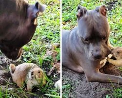 Dog Tries To Stop His Rodent Sibling From Digging A Hole, But He Keeps Failing