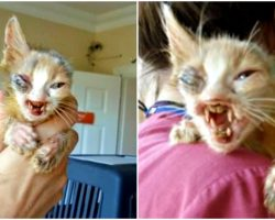 Adults Cringed At Kitten Too Terrifying To Look At So Little Girl Stepped Up