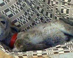 Donkey In Hammock Demands His Humans Sway Him Back & Forth Till He Falls Asleep