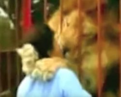 Lion Hugs & Kisses Rescuer Upon Seeing Her Again