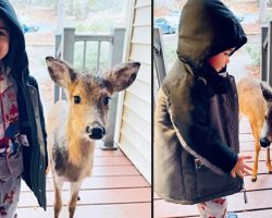 Little Boy Comes Back To The Door After Making A New Friend