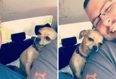Little Pooch Isn't Afraid To Let Wife Know That Husband Belongs To Her