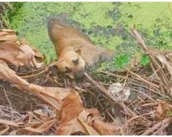 Lonesome Stray Hit Hard Was Knocked Into Canal & He Couldn't Climb Out