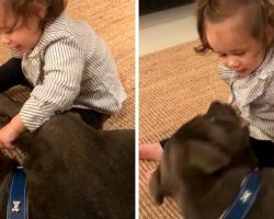 Baby Shoves Her Finger In Pit Bull's Mouth & Dog 'Launches' Himself At Her Face