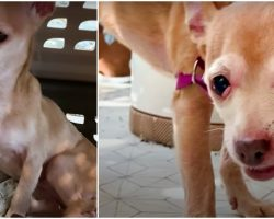 No One Stepped-Up To Foster Dog That Bit Everyone, Rescue Made 1 More Call