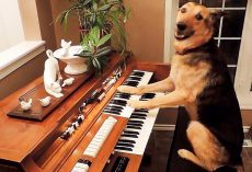 Dog Was Surrendered To A Shelter, Now She Plays The Piano Like A Seasoned Pro