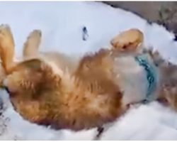Wounded Dog Was Taken To Snowy Mountains & Left There Because Owner Didn't Care
