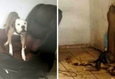 Dogs Were Locked Away In A Feces Filled Home, Forced To Watch Their Sibling Die