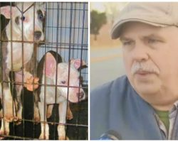 8-Dogs & Pups Confiscated After Being Locked Outside In Bitter Cold