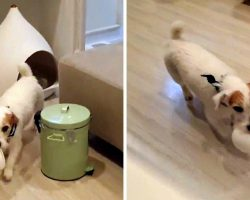 Dog Fetches His Bowl Every Night For Dinner, Then Puts Bowl Back After Dinner