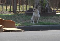 Abandoned Dog Sat On The Street Next To A Cardboard Box And Nothing Else