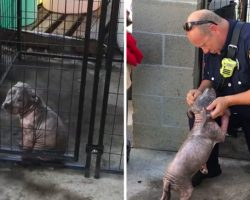 Depressed Pitbull Puppy At Shelter Finds Happiness After Being Adopted By The Firefighter Who Saved Her