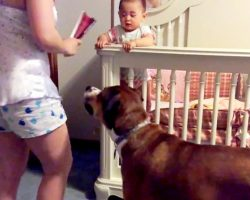 """Woman """"Attacks"""" Her Own Baby, But Her Dog Jumps In The Way To Protect The Baby"""