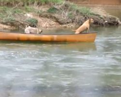 Two Dogs In A Runaway Kayak Think To Toss Rope Out To Lab To Pull Them To Land