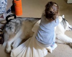 Little Girl Senses Her Dog Must Be Cold, Brings Over A Blanket To Cover Him Up