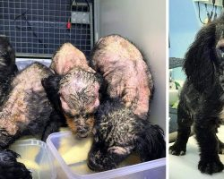 4 Puppies Were Found Rotting Away, But One Turned Out Different From The Others
