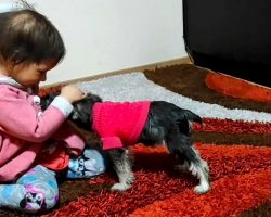 Girl With Cancer Gets Her First Puppy, And The Pup Is Already Helping Her Cope