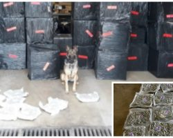 Very Good Boy K9 Cop Sniffs Out Multi-Million Dollar Van Filled With Drugs