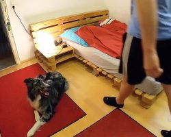 Dog Waits For His Owner To Leave The Room, Then Locks Door And Gets To Work