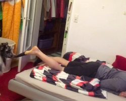 Dog Sees His Owner Collapsing On Bed, Pulls Off His Socks And Helps Him Relax