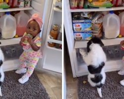 Dad Walks In On Partners-In-Crime Stealing Some Snacks From The Fridge
