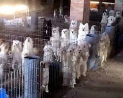 Puppy Mill Owner Cuts Off Dogs' Vocal Cords So Their Barks Won't Draw Attention